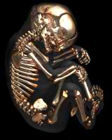 Кости новорождённого ребёнка