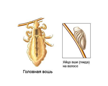 Таблетки для профилактики кишечника от паразитов