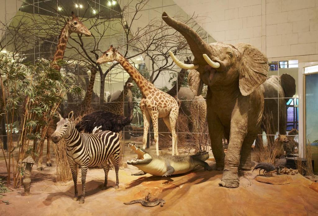 Дарвиновский-музей-в-Москве-фото