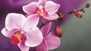 Orchid-Pictures-2-min-800x445